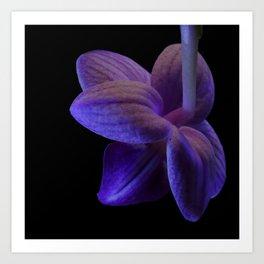 rear of Phalaenopsis Fanjan Orchid Art Print