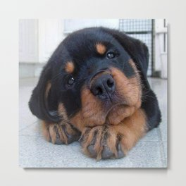Riley  🐾  The Rottweiler Puppy  🐾 Metal Print