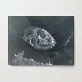 Racoon Skull Metal Print
