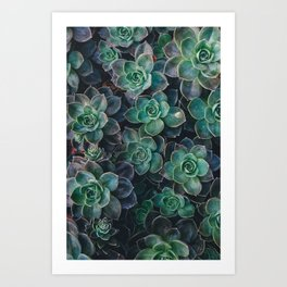 Close-up of green flowers Art Print