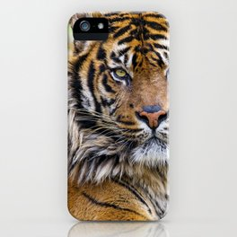Fascinatingly Fantastic Noble Grown Tiger Lying Down Close Up Ultra HD iPhone Case
