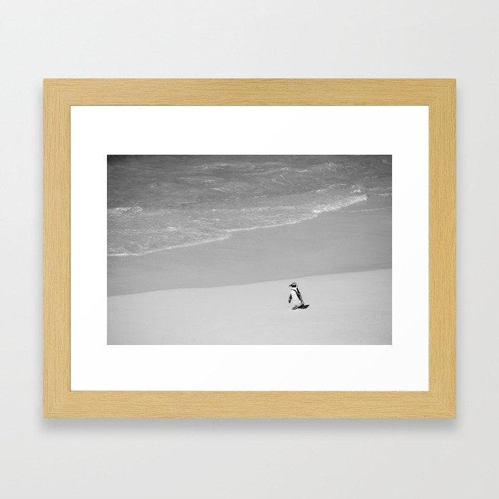 Lone African Penguin walking on beach Framed Art Print