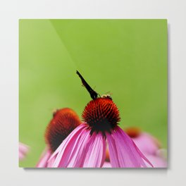 Bee and butterfly sitting on pink Echinacea bloom Metal Print