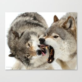 Laying down the law Canvas Print