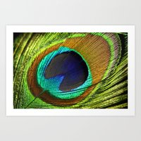 peacock feather Art Prints featuring peacock feather by mark ashkenazi