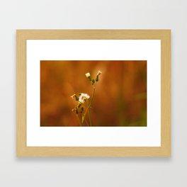 Wildflower III Framed Art Print