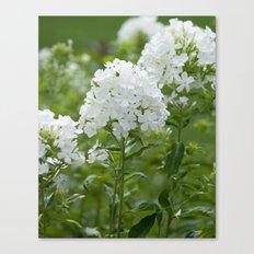 white flowers Canvas Print