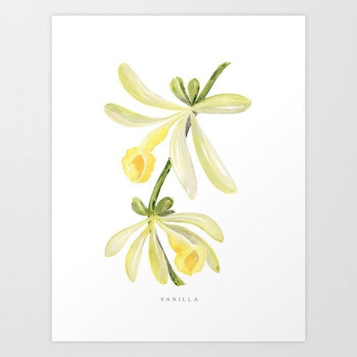 Watercolor vanilla orchid illustration Art Print