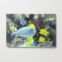 School Fish.  Metal Print