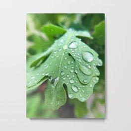 After the rain Metal Print