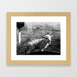 The Orphan Framed Art Print