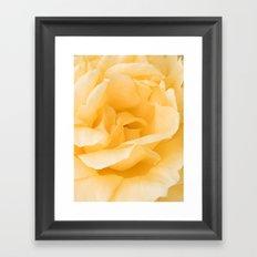 Vanilla Rose Framed Art Print