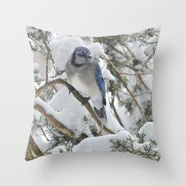 Snowy Woods Blue Jay Throw Pillow