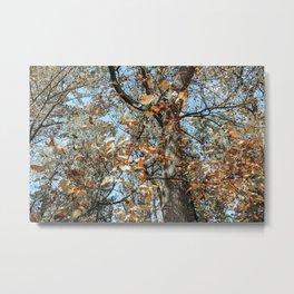 Autumn Scenes IV Metal Print