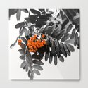 Red Rowan Berries In Black And White Background #decor #society6 by pivivikstrm