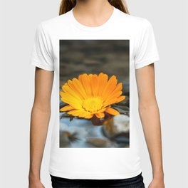 Flower Photography by amirali mirhashemian T-shirt