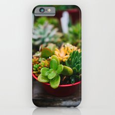 Succulent Garden Slim Case iPhone 6s