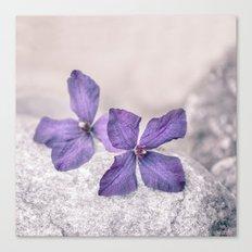 Zen Soft Pastel Purple Clematis Bloom Canvas Print
