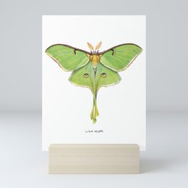 Luna Moth (Actias luna) II Mini Art Print
