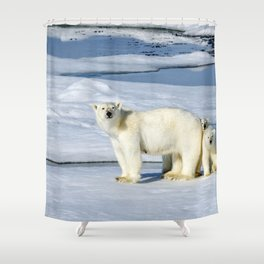 Spectecular Polar Bear Mother With Two Lovely Little Cubs Ultra High Resolution Shower Curtain