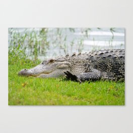 Gator High Five Canvas Print