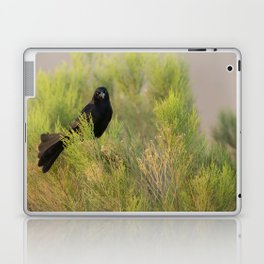Great-tailed Grackle (Quiscalus mexicanus) perches in a Coyote Bush (Baccharis Pilularis) at sunrise Laptop & iPad Skin