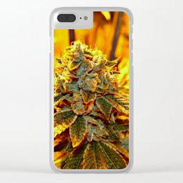 Pakalolo Maui Medicine Clear iPhone Case