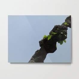 Poplar Branch Metal Print