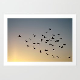 Gary's pigeons Art Print