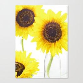 #Three  #Sunflowers for #decorativ #home #decors Canvas Print