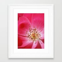 hot pink Framed Art Prints featuring Hot Pink by Zayda Barros