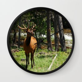 Rocky Mountain Wapiti Wall Clock