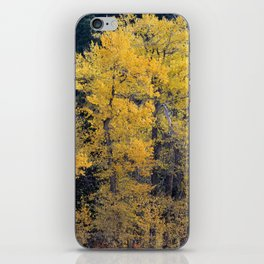 Cottonwood Creek iPhone Skin