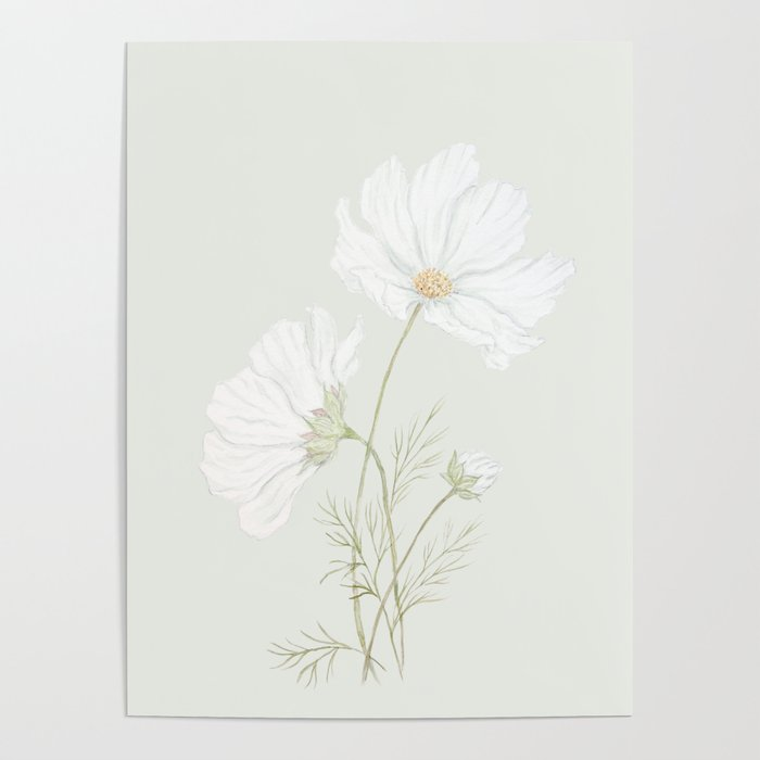 Dainty Cosmos Poster