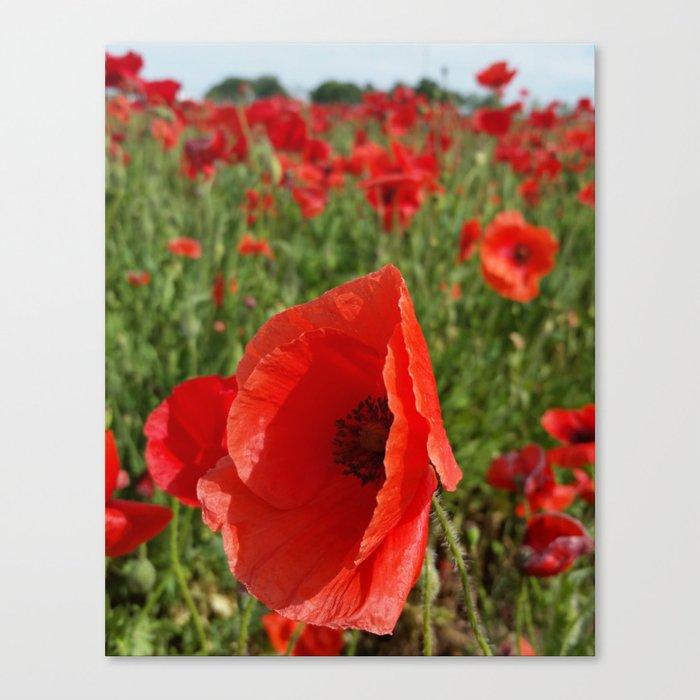 Poppy in a Field 3 Canvas Print