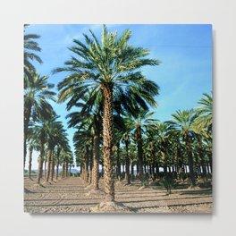 Date Palm Trees Metal Print
