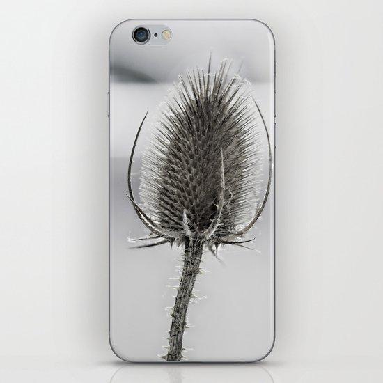 Dry flower iPhone & iPod Skin