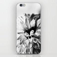 Dahlias 3 iPhone & iPod Skin