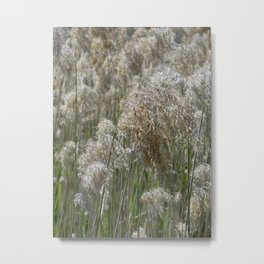 Windswept Metal Print