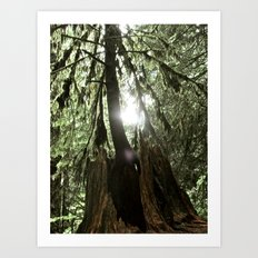 A Light Peers Through the Darkness Art Print