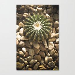 Round Cactus Canvas Print