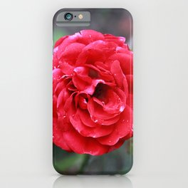 One Red Autumn Rose iPhone Case