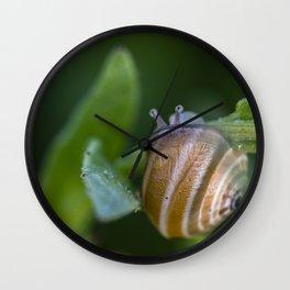 Snail on green Wall Clock