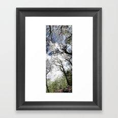 Vertical Trees Framed Art Print