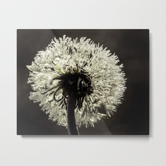 frosted dandy Metal Print