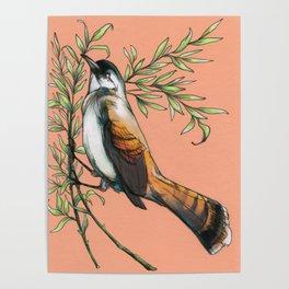 Coraya Wren Poster