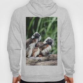 Cotton-top Tamarin Hoody