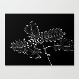 Rowan berry 2 Canvas Print