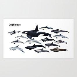 Delphinidae: Dolphin family Art Print