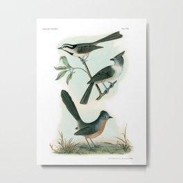 Old Bird Flycatcher Wall Art 1840 Metal Print